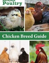 Backyard Poultry Magazine Chicken Breed Guide