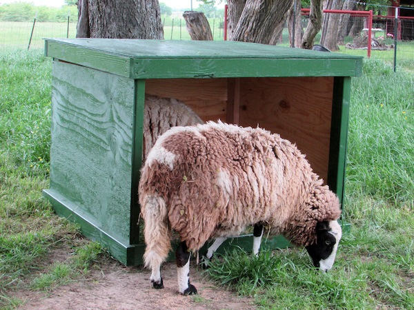 sheep-shelter