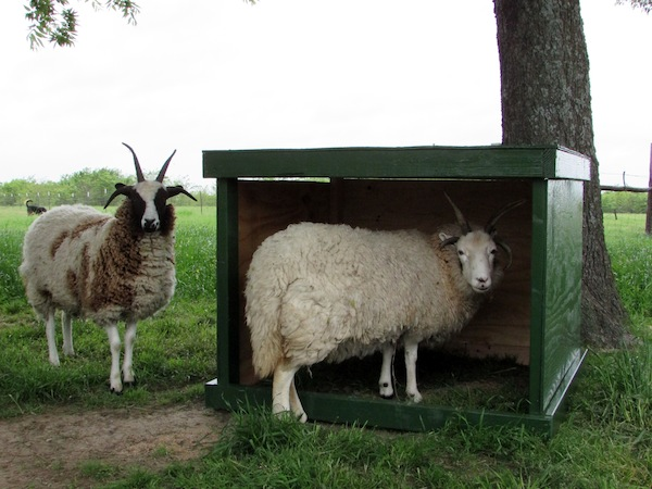 A DIY Mobile Sheep Shelter