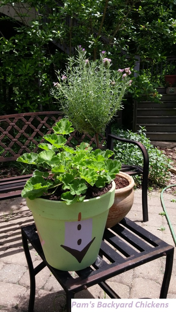 planting-herbs-in-pots