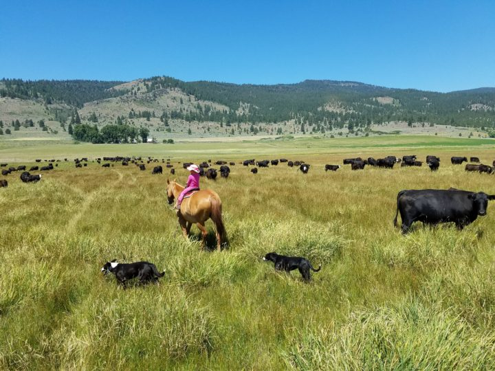 What is Rotational Grazing and Why is it Misunderstood?