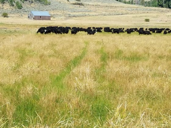 what-is-rotational-grazing