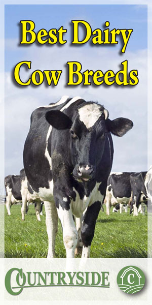 Best Dairy Cow Breeds
