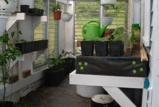 A Guide to the Best Greenhouse Plants