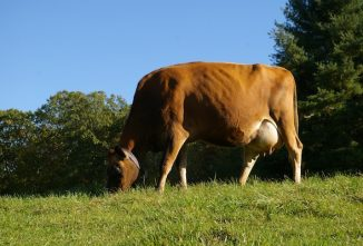 Understanding Forage Production and Forage Quality