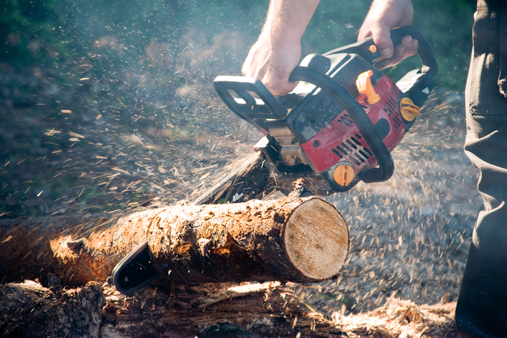 Choosing the Right Saw from the Top-Rated Chainsaws