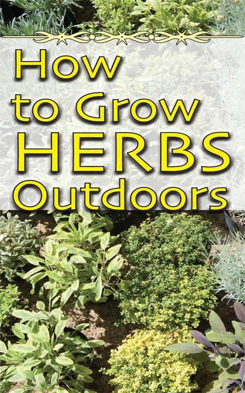 The Joys And Challenges Of Growing Herbs Outdoors Countryside