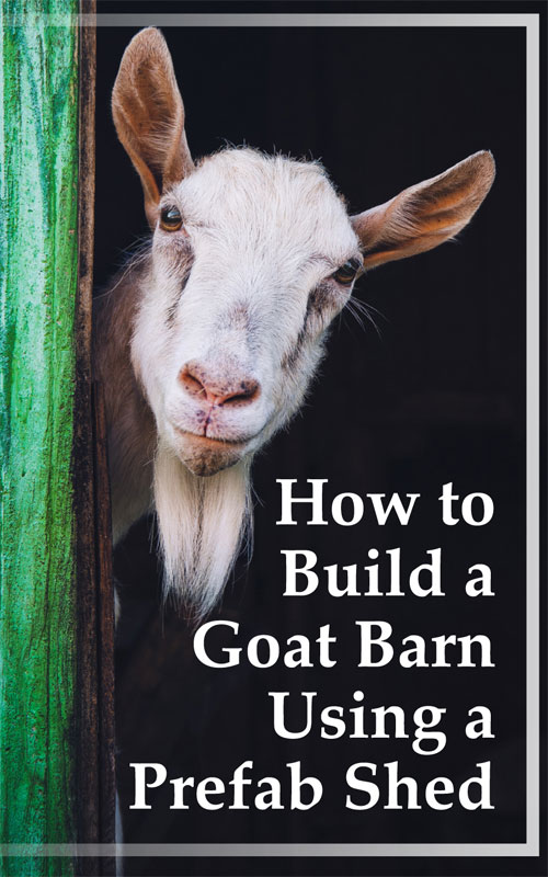 Build a Goat Barn