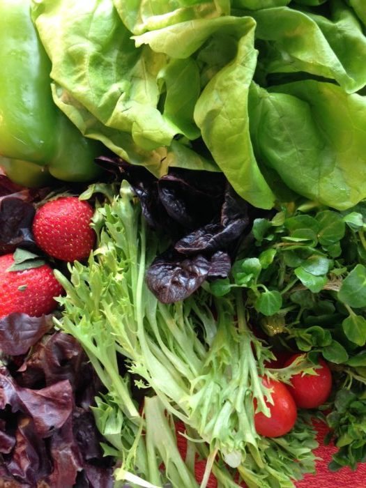 Use a Hydroponic Grow System for Year-Round Produce