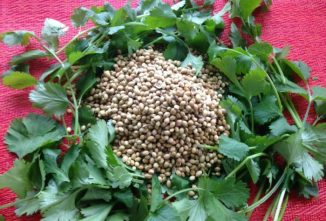 Coriander/Cilantro: Herb and Spice All in One