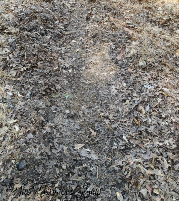 how-to-check-soil-ph