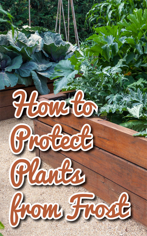 Protect From Frost