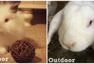 How Much Are Rabbits and What Does it Cost to Raise Them?