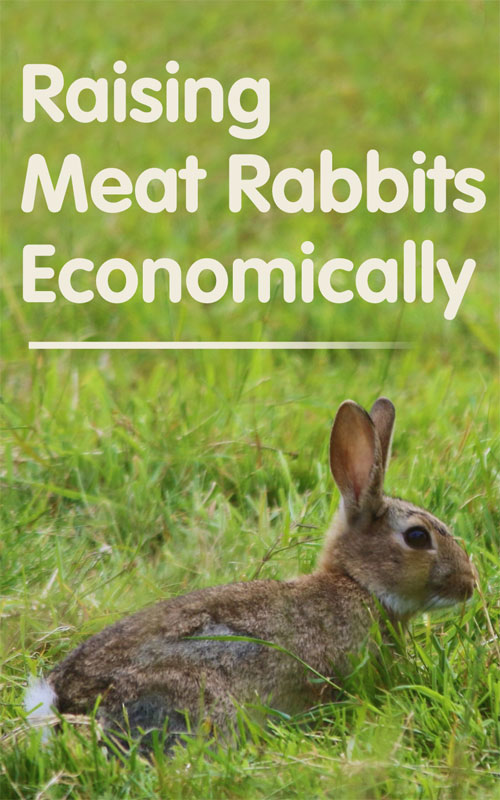 Meat Rabbits