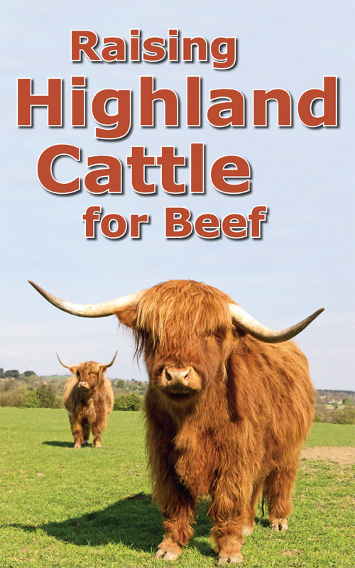 Raising Highland Cattle