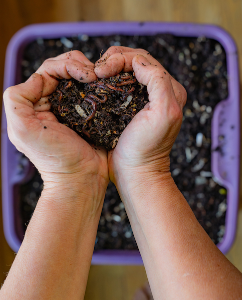 how-to-vermicompost