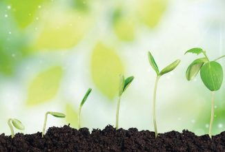 How to Revive Soil with Organic Gardening