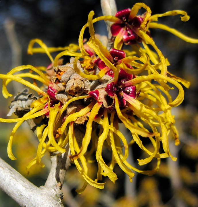 Top 10 Witch Hazel Uses