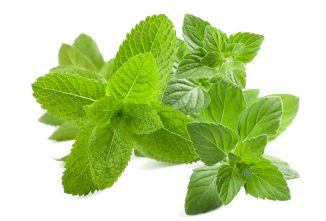 Growing Catnip for Home and Medicinal Uses