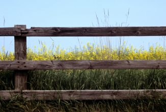 Cheap Fencing Ideas for the Homestead