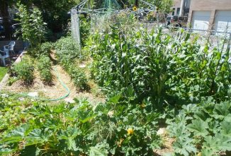 Crop Rotation: Benefits and Why it Matters