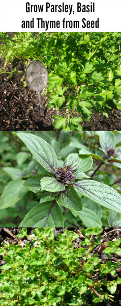 grow-herbs-from-seed