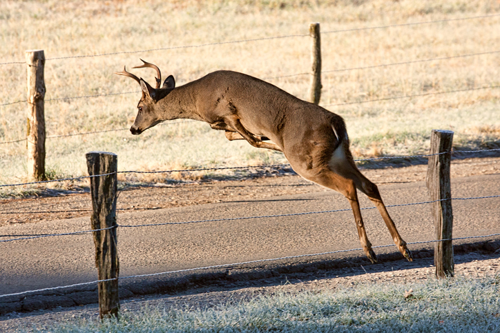Deer Fencing Tips to Protect Wildlife and Gardens