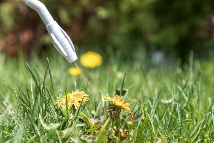 Unintended Consequences of Lawn Herbicides