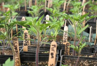 A Guide to Growing Seedlings Indoors
