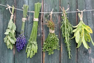 Garden Herbs List: No Salt? No Sugar? No Sweat!