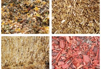 What is the Best Mulch to Prevent Weeds?