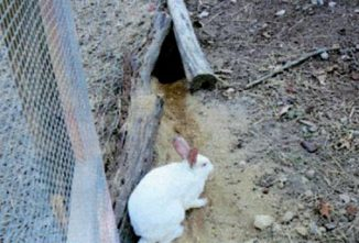 Raising Rabbits for Meat (They're Quieter Than Chickens)