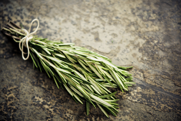 Rosemary Benefits: Rosemary Isn't Just For Remembrance