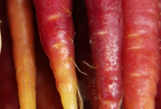 A Guide to Different Colored Carrots