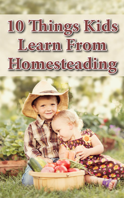 homesteading-today