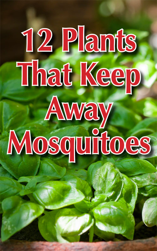 Keep Away Mosquitoes