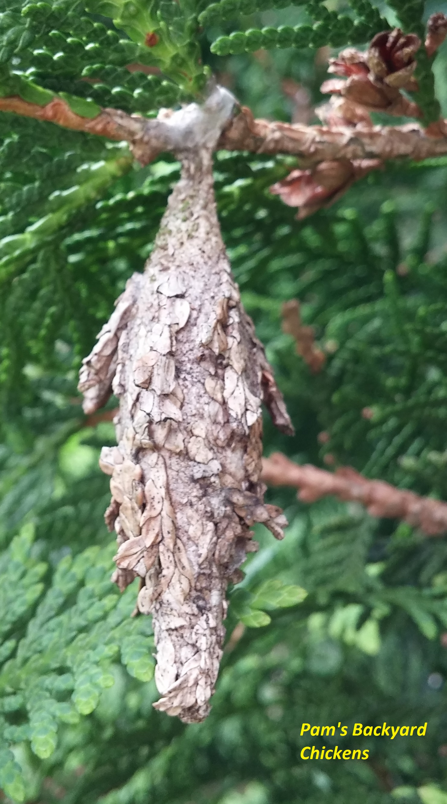 How to Get Rid of Bagworms - Countryside