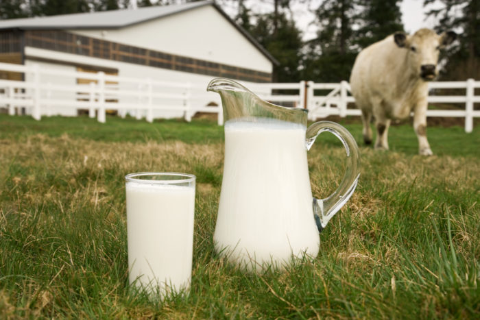 dairy-farming-project