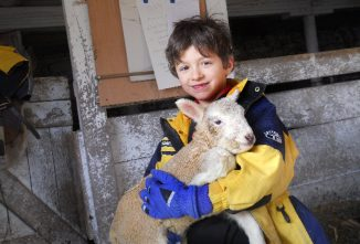 How Sheep Adopters Sponsor Farm Animals