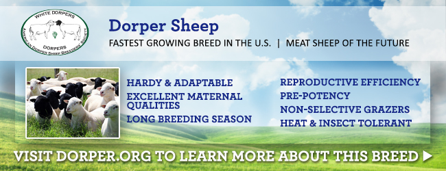 Sheep Farming for Beginners and Beyond - Countryside