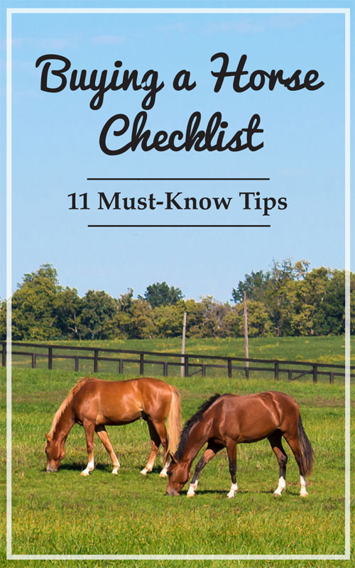 Buying a Horse Checklist