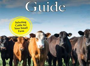 Cattle Guide
