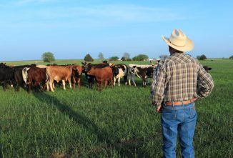 The Benefits of Reduced or Low-Stress Livestock Handling