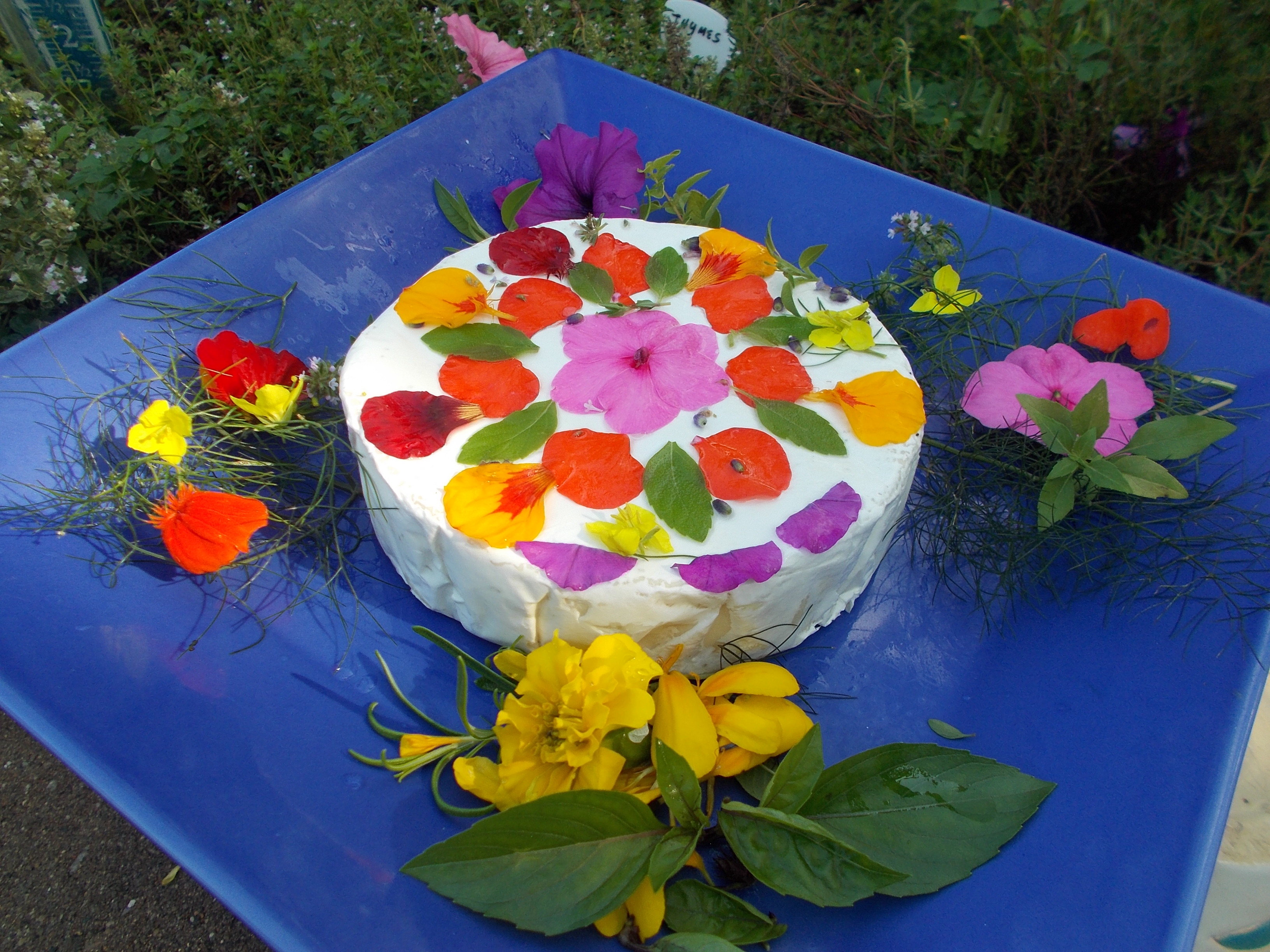 Edible Flowers List: 5 Plants for Culinary Creations