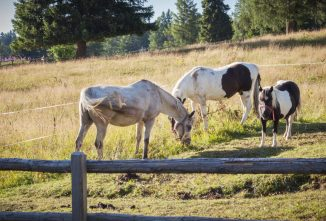 Simple Homesteading – How to Start Successfully