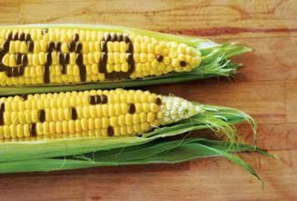 Genetically Engineered Crops Divide The Food Movement
