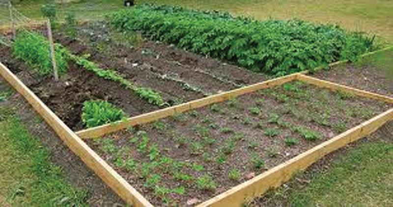 Gardening: A Vital Step To Self-Sufficiency