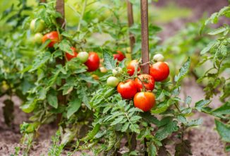 Reader Tip: A Fast Way to Preserve Whole Tomatoes