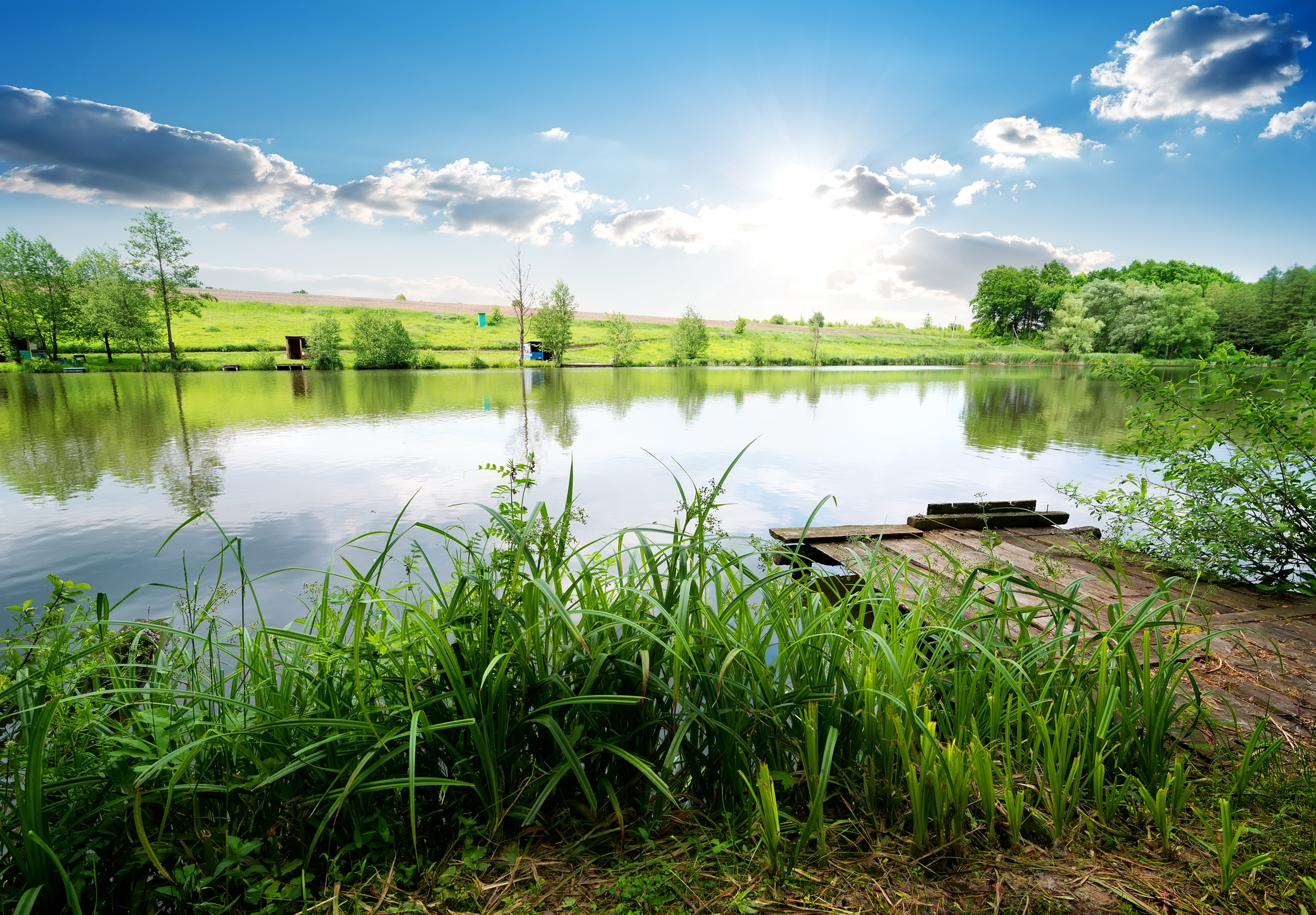 Pros and Cons of Building a Pond