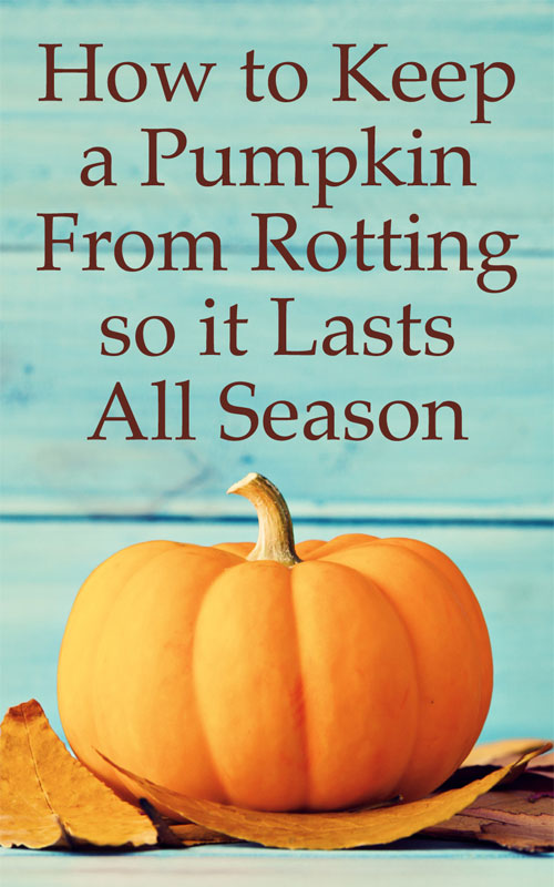 Keep Pumpkins From Rotting